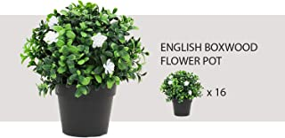 Best english boxwood home depot Reviews
