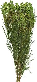 大地農園 プリザーブドフラワー バーゼリア (約75g入り) グリーン DO003100-700
