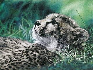 FAN C. Canvas Wall Art unframed – Cheetah Animal Photography Prints – 90X65 cm (Approx. 36X26 inch)