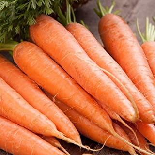 Scarlet Nantes Carrot Seeds, 500+ Premium Heirloom Seeds, Excellent Carrot! Fantastic Addition to Your Home Garden!, (Isla's Garden Seeds), Non GMO, 85% Germination Rates, Highest Quality Seed