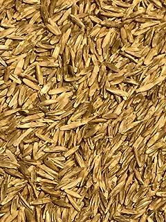 Annual RyeGrass Seed 5 lbs (Tetraploid)