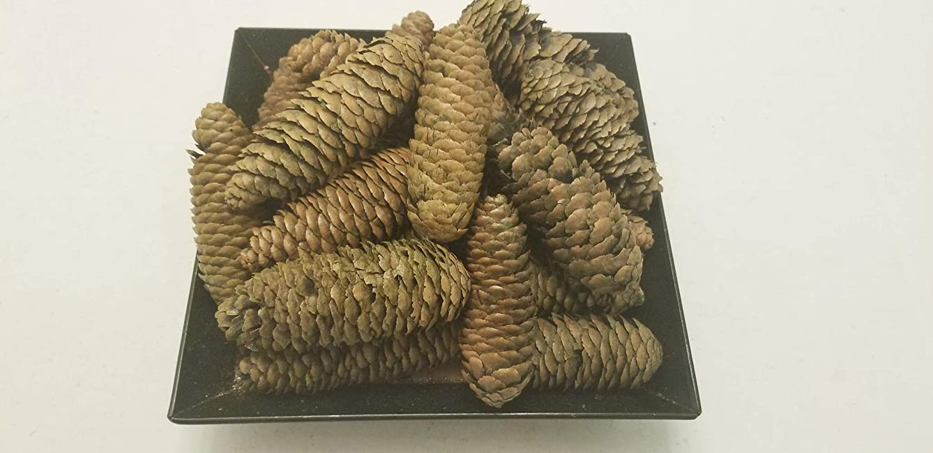Little Valley Green Spruce Pinecone - Large Bag - Perfect Bowl Fillers, Fall, Winter Christmas Decor