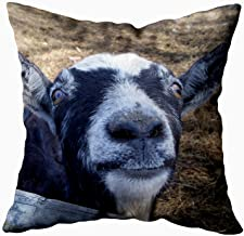 Capsceoll Goat Hello Friendly Goat Decorative Throw Pillow Case 20X20Inch,Home Decoration Pillowcase Zippered Pillow Covers Cushion Cover with Words for Book Lover Worm Sofa Couch