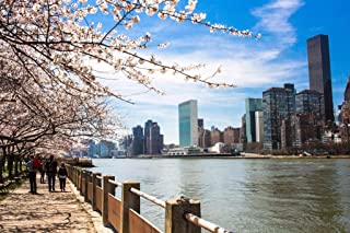 Blooming Trees on Roosevelt Island New York City Photo Photograph Cool Wall Decor Art Print Poster 36x24