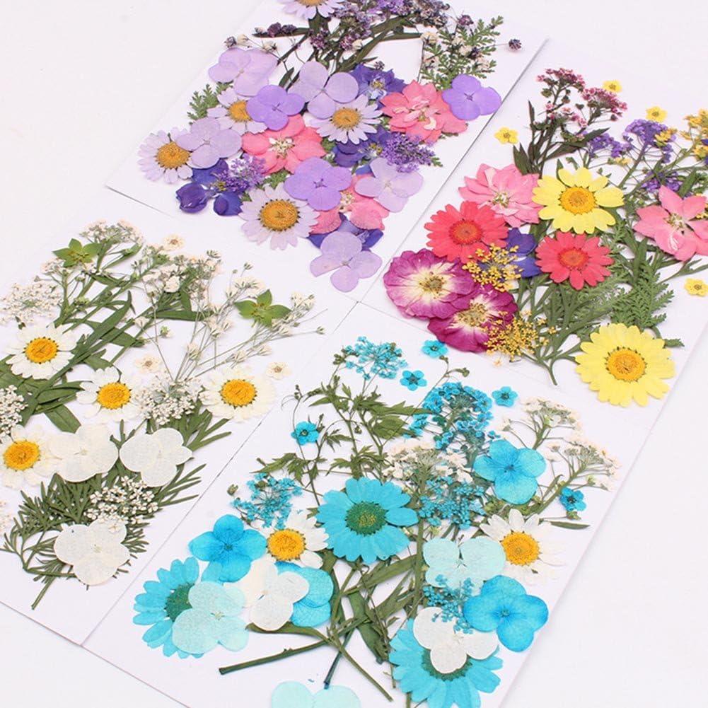 gemischte getrocknete Echt-Blumen Cutogain gepresste Blumen f/ür DIY-Kunst als Geschenk Blumendekor Sammlungen B
