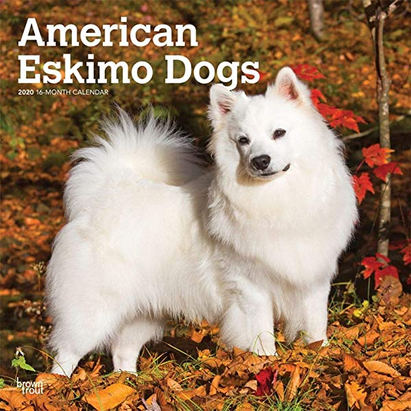 2020 American Eskimo Dogs Wall Calendar By BrownTrout