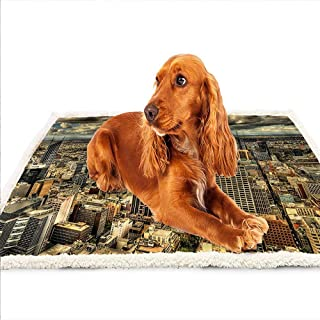 Best dog couch australia Reviews