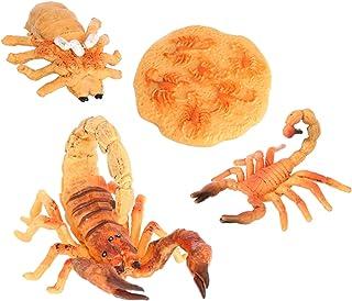 simhoa Scorpion Life Cycle Plastic Toy Model
