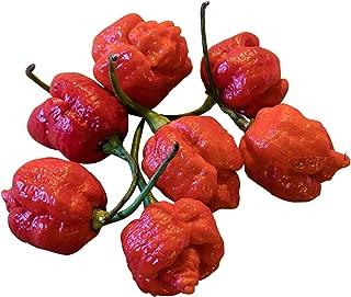 Trinidad Scorpion Moruga Pepper 10 Seeds (World-record-chili 2013) -Isolation-grow- Sell By Samenchilishop(world)