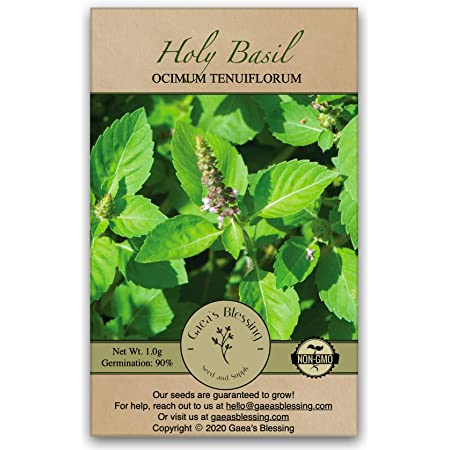 Gaea's Blessing Seeds - Holy Basil Seeds - Heirloom Seeds with Easy to Follow Planting Instructions - Sacred Tulsi Open-Pollinated High Yield Non-GMO 90% Germination Rate