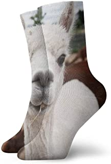 ASS, Pack de calcetines de vestir unisex Alpaca Lavender Farm Funny Polyester Crew Calcetines