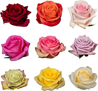 Blooming Emotions 50 Standard Stem (15.5'') Fresh Roses Your Colors | Fresh Bulk Flowers for Delivery