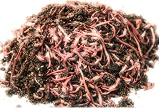 phoenix worms for sale