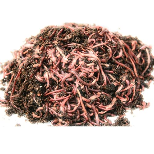 1000 Count Red Wiggler Worms Live Composting Worms