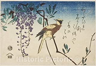 Historic Pictoric Print : Black-naped Oriole and Wisteria, Utagawa Hiroshige, c 1961, Vintage Wall Decor : 36in x 24in