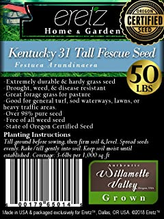 Kentucky 31 Tall Fescue Grass Seed by Eretz - Willamette Valley, Oregon Grown (50lbs)