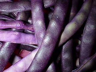 Stangenbohne - Blauhilde - 30 Samen