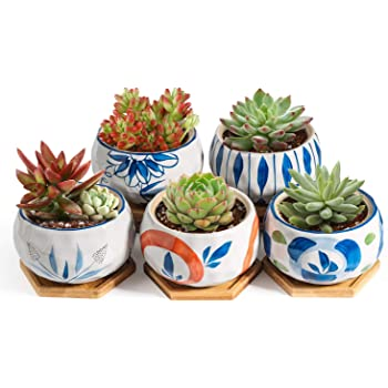 T4U 11CM 陶器鉢 和風シリーズ 多肉植物鉢 サボテン鉢 植木鉢 竹製トレイ付き 底穴付き 5点セット ギフト 誕生日