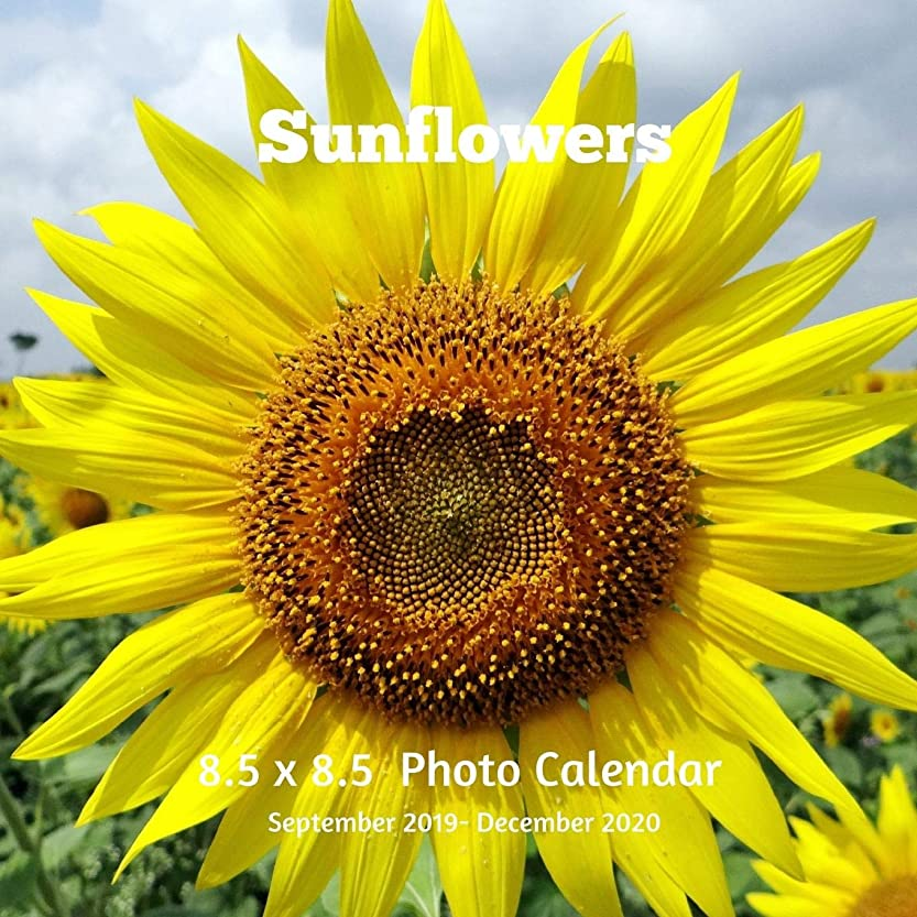 ロンドン天井擁するSunflowers 8.5 X  8.5 Calendar September 2019 -December 2020: Monthly Calendar with U.S./UK/ Canadian/Christian/Jewish/Muslim Holidays-Flowers Nature Wildflowers