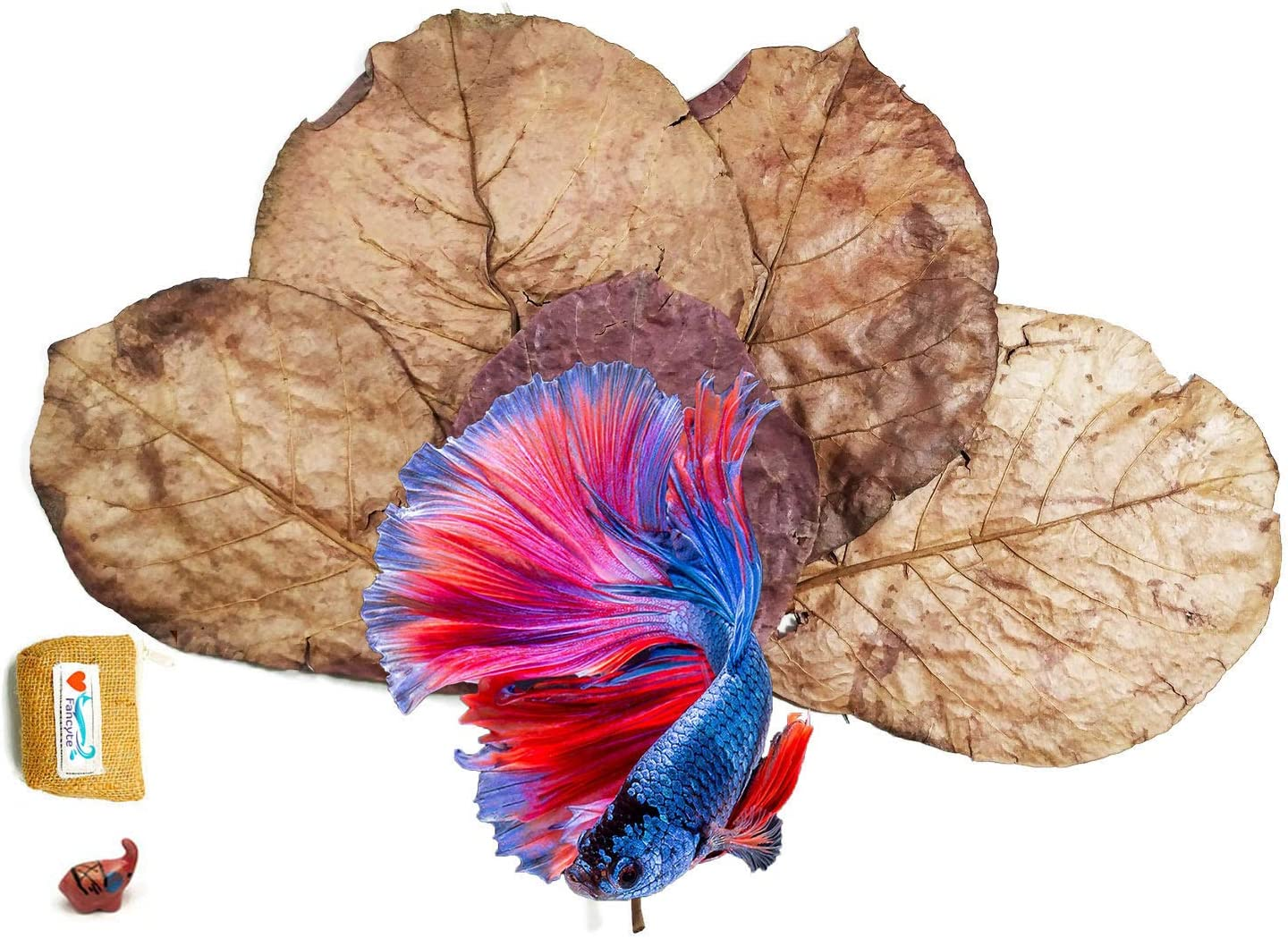 FANCYTE 18-25CM 50 NEW before selling Grams 25PIECES Tan Fish Almond Leaves Elegant Indian
