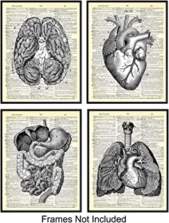 Internal Organ Wall Art Print on Dictionary Photo - Set of Four (8x10) Ready to Frame Vintage Photos - Cool Steampunk Home Decor - Easy Gift Giving for Doctors - Intestine, Heart, Brain and Lungs