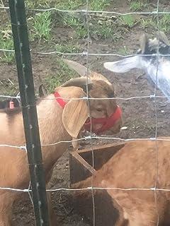 Carter Pet Supply Goat or Llama Halter Small Medium Or Large