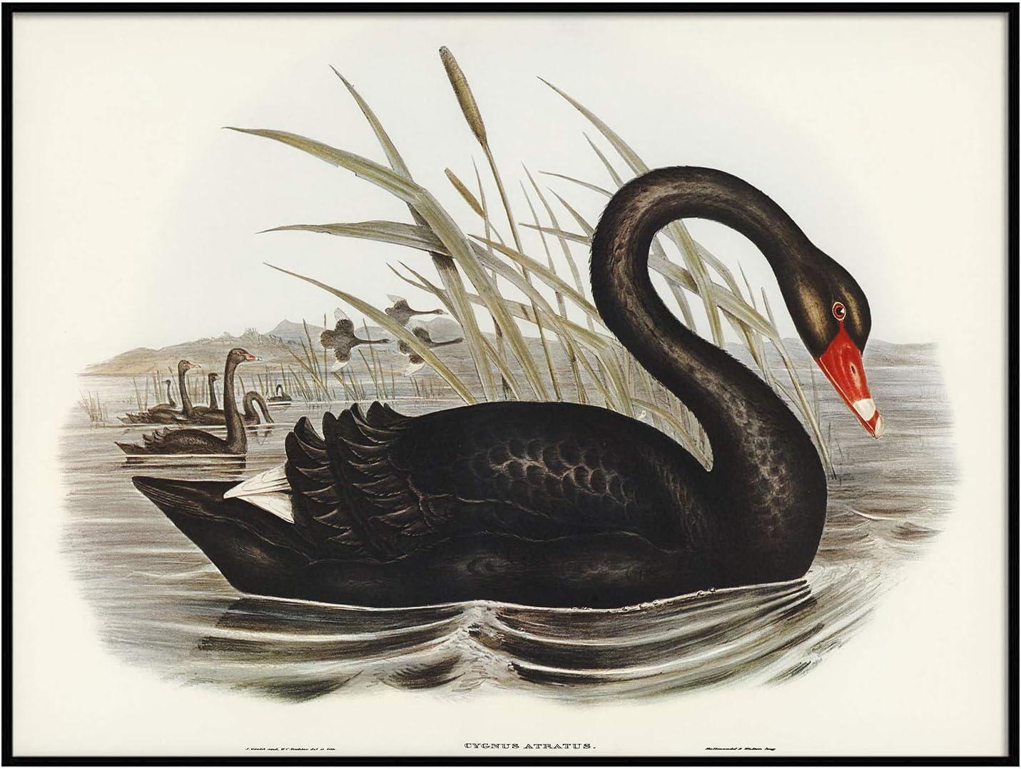 Vintage Print Vintage Art Bird Print Scrapbooking 80s Art Baby Swan Cygnets Mixed Media Vintage Swan Print 80s Print Stapco Print
