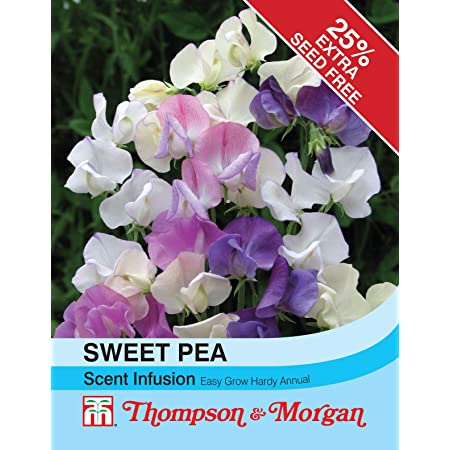Thompson /& Morgan 25 Seeds Sweet Pea Scent Infusion Flower
