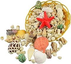 GK 1 kg de conchas de mar mixtas grandes para decoración de mesa, acuario de boda, conchas de peso, manualidades tropicales