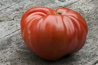 74 Seeds Tomato German Red Strawberry Heirloom Vegetables Plant Seeds #GRC1