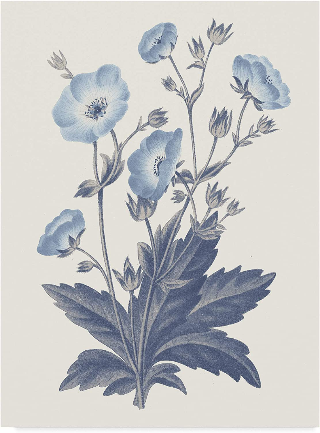 Trademark Fine Art bluee Botanical VI by Wild Apple Portfolio, 14x19