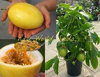 VISTARIC Giant Yellow Passion Fruit! (Passiflora Edulis VAR Flavicarpa) Seeds