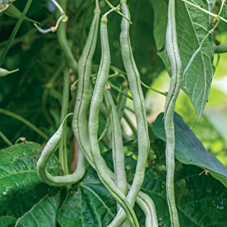 fortex pole bean seeds