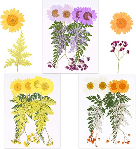 Vignee echte getrocknete gepresste Blumen Bl/ätter Bl/ütenbl/ätter zum Basteln violett
