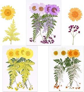 VINFUTUR 30pcs Fleurs séchées Naturelles Vraies Fleurs Pressées Decoration pourr Résine Epoxy Bougie Bricolage Scrapbookin...