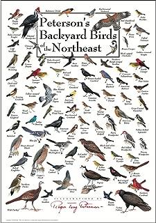 Best peterson's backyard birds of the northeast poster Reviews