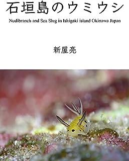 Sea Slugs encounter Ishigaki island Okinawa Japan (Japanese