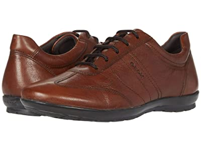 Geox Symbol (Brown) Men