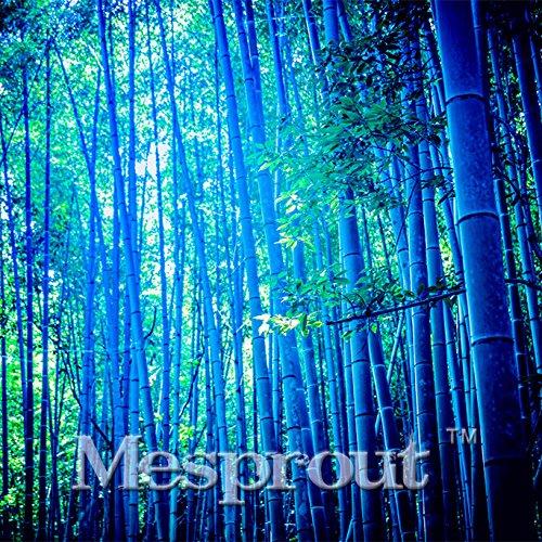 À bas prix promotionnels 50 pcs / sac rares Graines Blue Bamboo Graines décoratif de jardin Jardinière Bambu Arbre pour Diy jardin