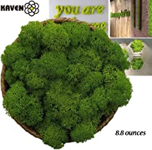 Moss Preserved, Green Moss for Fairy Gardens, Terrariums, Any Craft or Floral Project or Wedding Other Arts (Green 8.8oz)