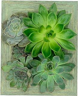 Portrait Gardens Wall Planter (5x7) - Instant Vertical Succulents Herbs Indoor Garden DIY Picture Cactus Plastic Ready to Hang Pin Plant Display Water