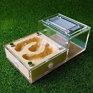 飼育ケース アリ農場 アクリル 石膏 蟻 育種 ボックス トランスペアレント 昆虫 表示 ボックス 蟻 育種 家 かんたん に インストール ために 子供達 そして 大人 (Color : F)