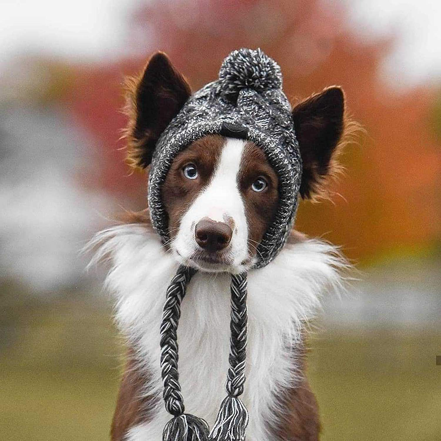 Knit Thermal Hat Accessory for Dog Pet Pet Dog Headgear