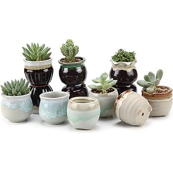 T4U Small Ceramic Succulent Pots with Drainage Set of 12, Mini Pots for Plants, Tiny Porcelain Planter, Air Plant Flower Pots Cactus Faux Plants Containers, Modern Decor for Home and Office
