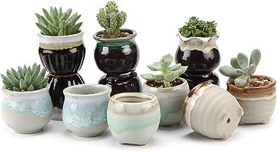 Amazon Com Succulent Pots Bulk
