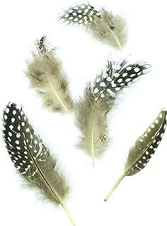 275-350, Guinea Feathers, Guinea Plumage, Natural, Dyed, 1-4