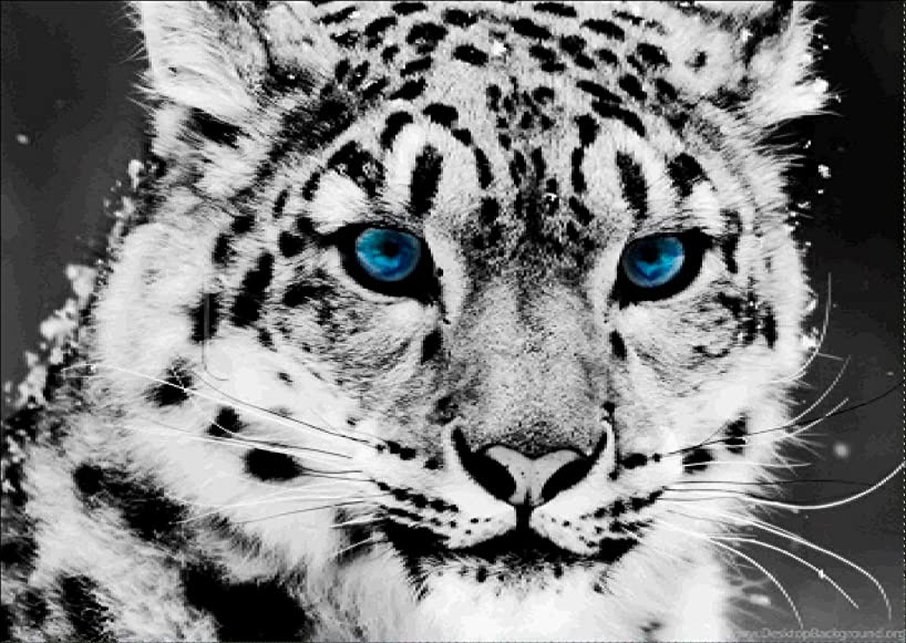 DIY Diamond Painting Kits for Adults, Cute Leopard Full Drill Rhinestone Embroidery Cross Stitch Supply Arts Craft Canvas Wall Decor 16x12 inches