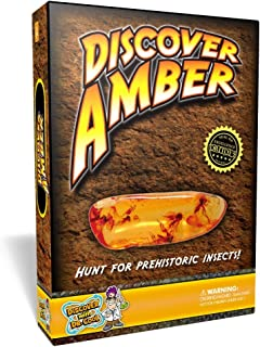 Polish Real Amber in Search of Ancient Insects!