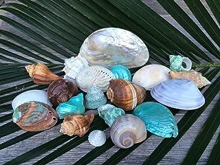 beautiful seashells for sale