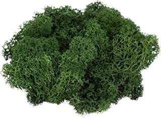 Reindeer Moss Preserved | Spring Green Moss | for Fairy Gardens, Terrariums, or Any Craft or Floral Project | (2 Ounces) | Plus Free Nautical Ebook by Joseph Rains